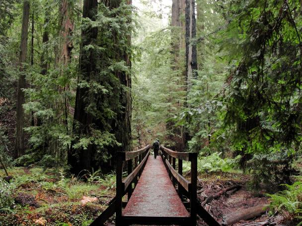 Hiking is one of the many things to do in Mendocino.